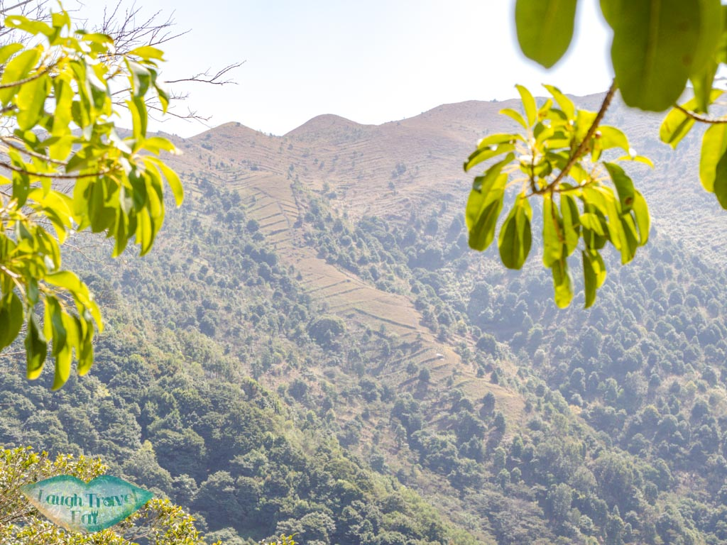 stepped tea farm plots upper nature reserve kadoorie farm tai po hong kong - laugh travel eat